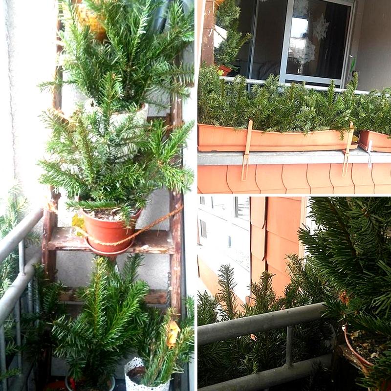 den weihnachtsbaum weiterverwenden kreativ und umweltfreundlich. Black Bedroom Furniture Sets. Home Design Ideas